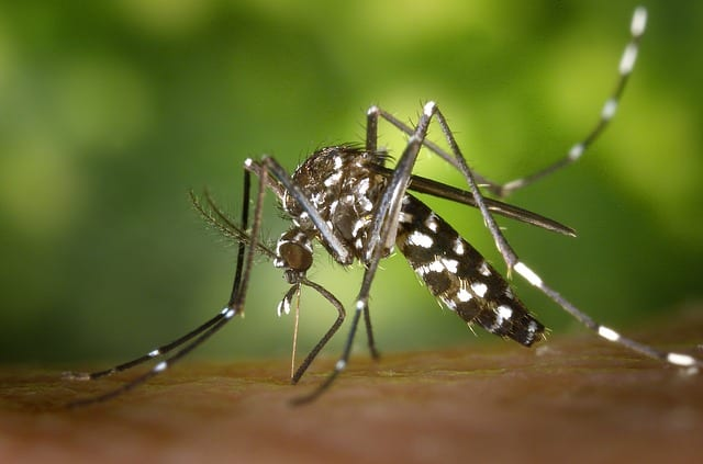 mosquito control in Normal